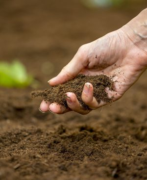 producto_agricultura_nv_plaguicidas_nemacare_mexico