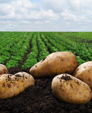producto_agricultura_plaguicidas_agroderma_mexico